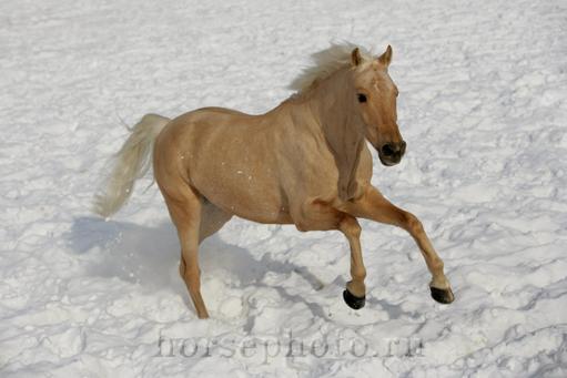 Лошадь39.jpg (511x341, 119Kb)