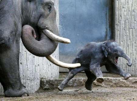 elephant1.jpg (450x334, 23Kb)