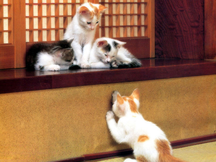 Cats11.jpg (700x525, 102Kb)