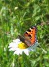 butterfly.jpg (100x135, 6Kb)