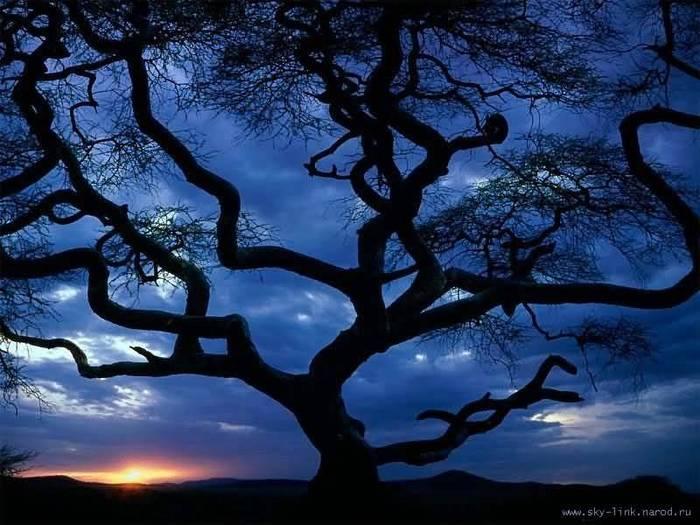 Dead tree.jpg (700x525, 61Kb)
