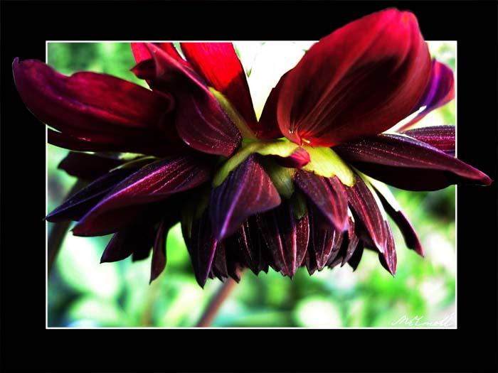 цветок.jpg (700x525, 69Kb)