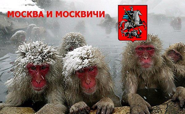 moskovities.jpg (600x370, 62Kb)