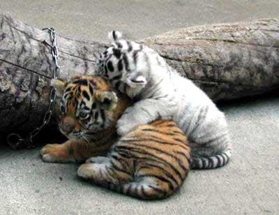 baby_animals_44.jpg (400x308, 20Kb)