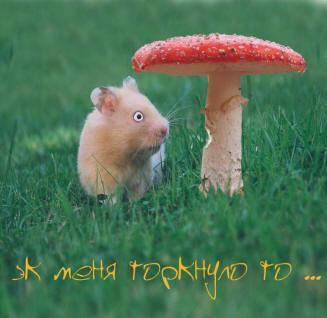 http://img.liveinternet.ru/images/attach/2/5288/5288820_11.jpg