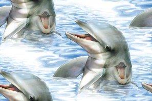 dolfijn2.jpg (297x198, 16Kb)