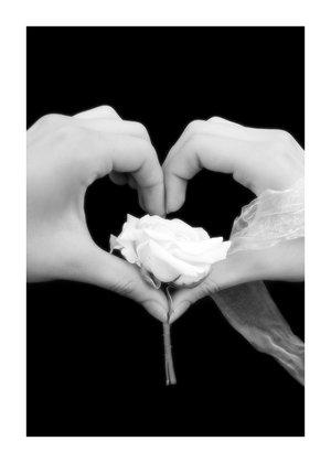 роза белая сердце.jpg (300x420, 11Kb)