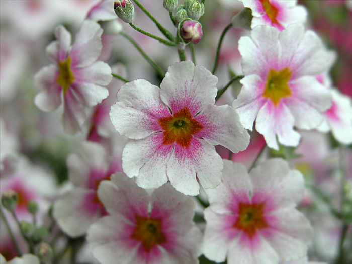 13pretty-flower.jpg (700x525, 107Kb)
