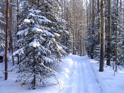 winter%20forest.jpg (425x319, 86Kb)