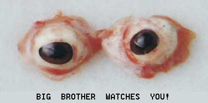eyed.jpg (420x208, 10Kb)