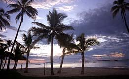 пальмы2.jpg (262x161, 10Kb)