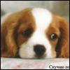 dog7.jpg (100x100, 10Kb)