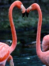 фламинго.jpg (189x254, 15Kb)