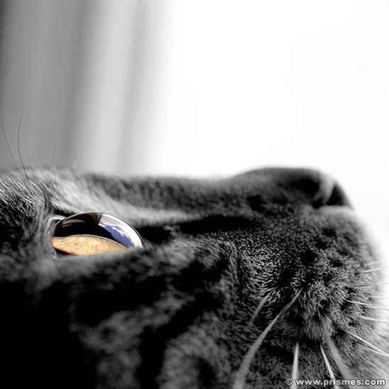 черная кошка.jpg (548x548, 22Kb)