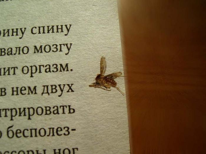 комарик1.jpg (700x525, 99Kb)