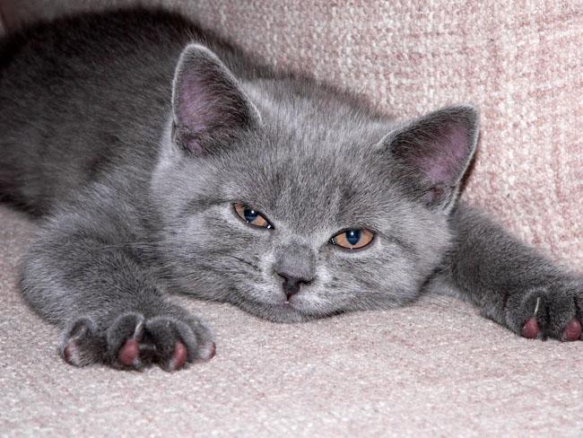 cat.jpg (650x488, 119Kb)