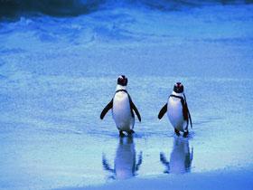 пингвин.jpg (280x210, 13Kb)