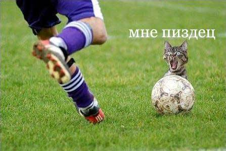 5564846_4365794_938653_919007_1460_cat_footbol.jpg (447x300, 23Kb)