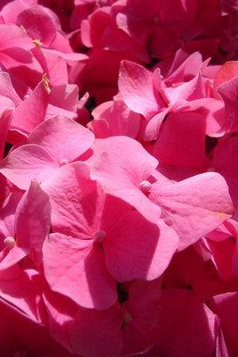 цветы.jpg (267x400, 31Kb)