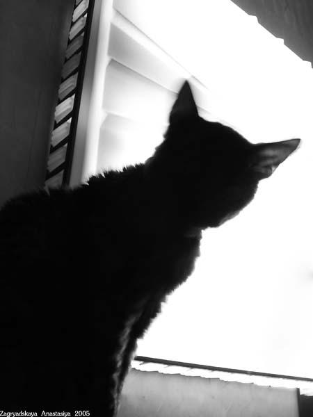 кошка чб.jpg (450x600, 35Kb)