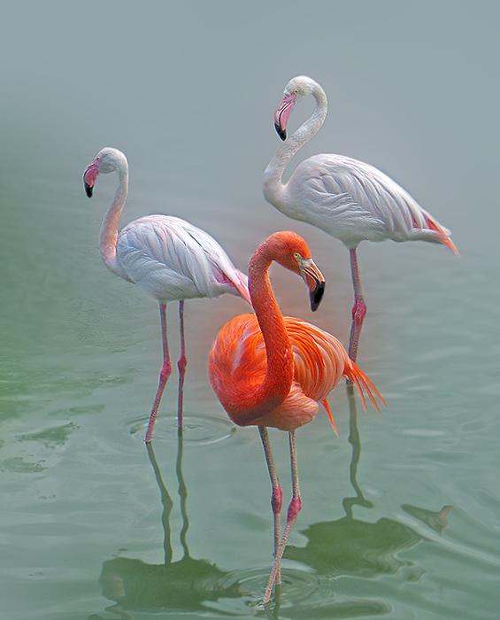 Описание: b Птицы, прилетевшие на зимовку из России в Турцию, пьют, матерятся и.