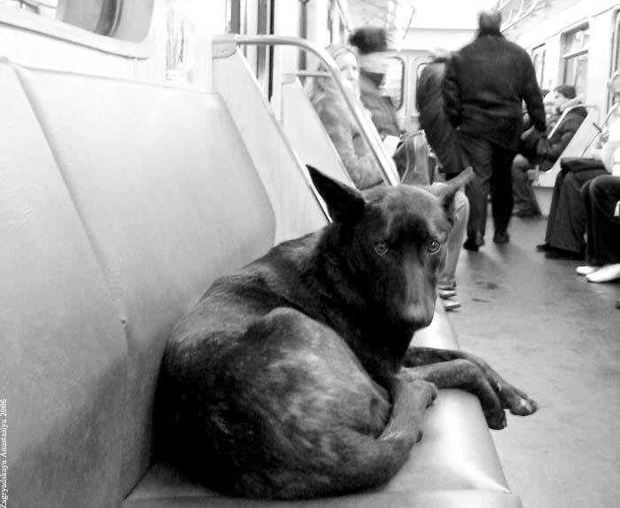 собака в метро.jpg (700x573, 63Kb)