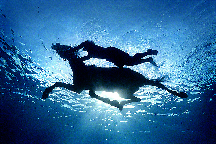 seahorse-(v).jpg (700x468, 595Kb)
