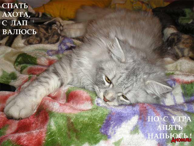 ahom-ru_cat1_20051212_01_640x480.jpeg (640x480, 57Kb)