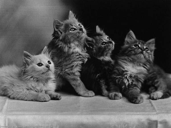 animals_cats009d1.jpg (600x450, 56Kb)