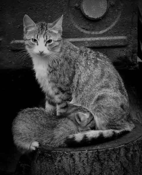 mothercat1dnev.jpg (487x600, 58Kb)