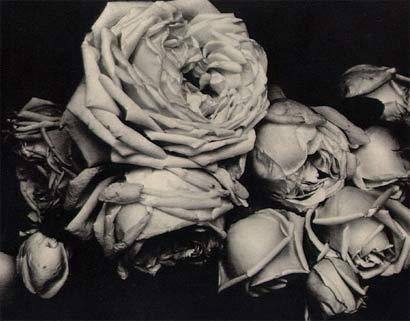 Roses.jpg (410x321, 22Kb)