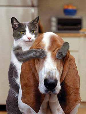 dogandcat.jpeg (301x400, 35Kb)
