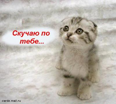 кот.jpg (400x360, 36Kb)