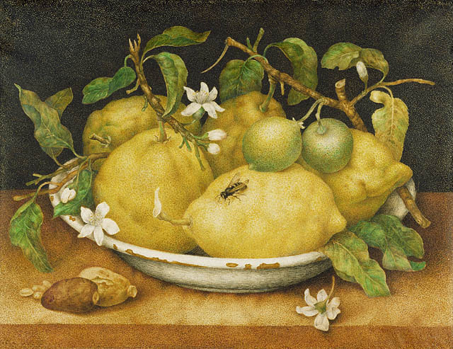 Giovanna Garsoni 1640Still Life with Bowl of Citrons.jpg (640x493, 99Kb)