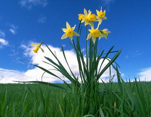 flowers02.jpg (487x379, 27Kb)