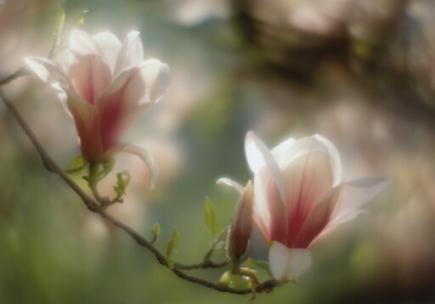 весна 4.jpg (435x304, 72Kb)