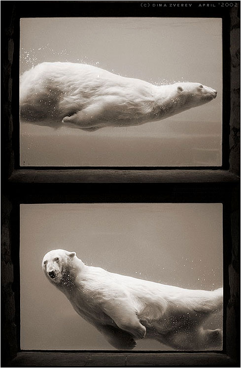 bears_005.jpg (489x747, 66Kb)