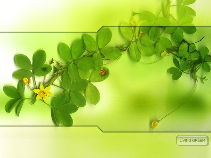 design59.jpg (700x525, 93Kb)