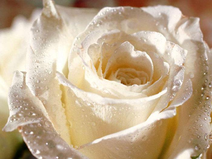 flowers_063.jpg (700x525, 77Kb)