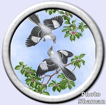 MockingbirdsAndHollyл.jpg (370x366, 32Kb)