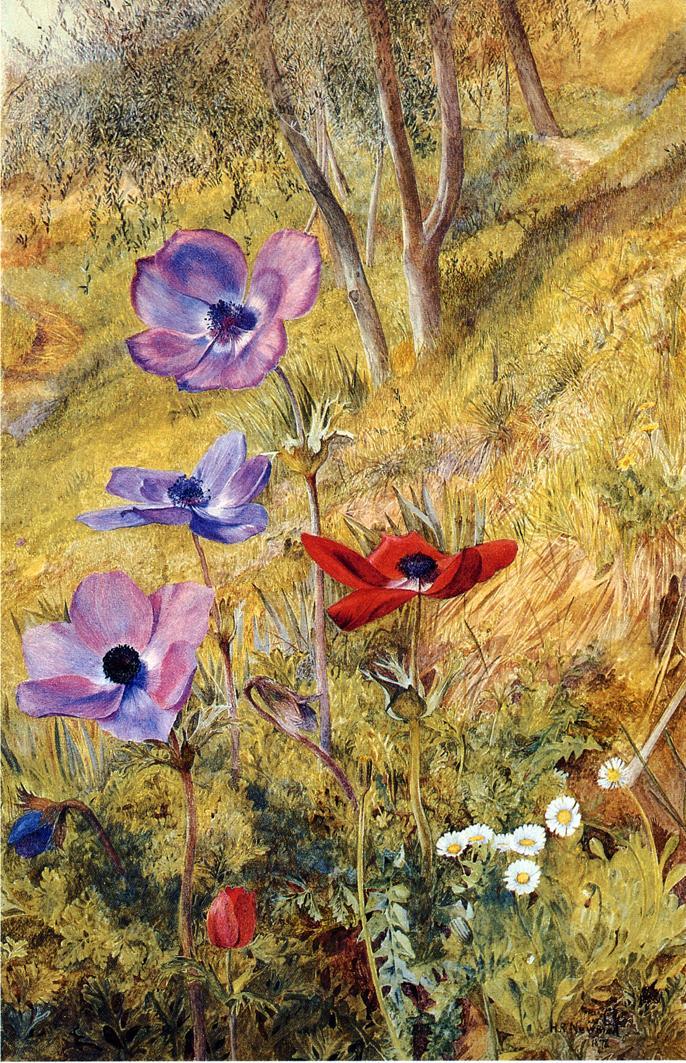 Anemones - (Henry Roderick Newman 1876.jpg (686x1063, 238Kb)