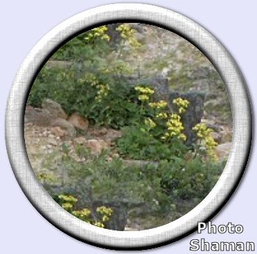 paleflorer478ж.jpg (370x366, 27Kb)