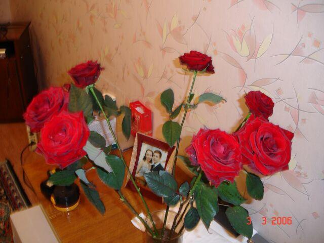 Розы.jpg (640x480, 63Kb)