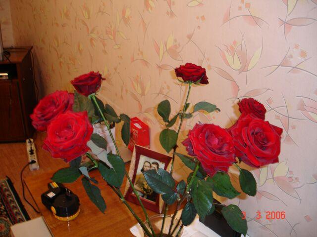 Розы 2.jpg (640x480, 64Kb)