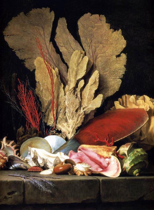 VALLAYER_COSTER_Anne 1744-1818 Still_Life_With_Tuft_Of_Marine_Plants_Shells_And_Corals 1769.jpg (514x699, 143Kb)
