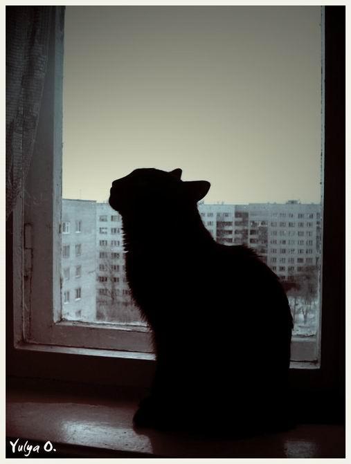 Cat.JPG (507x671, 29Kb)