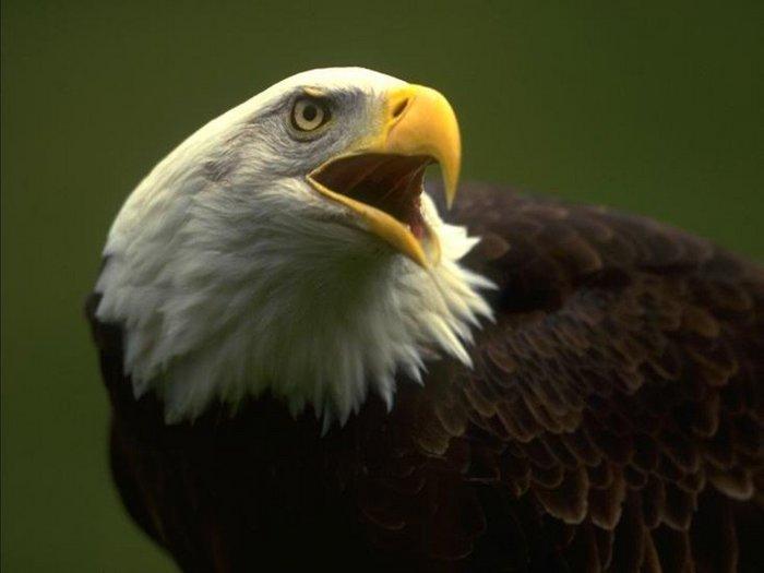 Animals_Birds__001746_1.jpg (700x525, 32Kb)