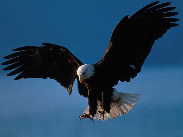 Animals_Birds__001749_1.jpg (700x525, 20Kb)