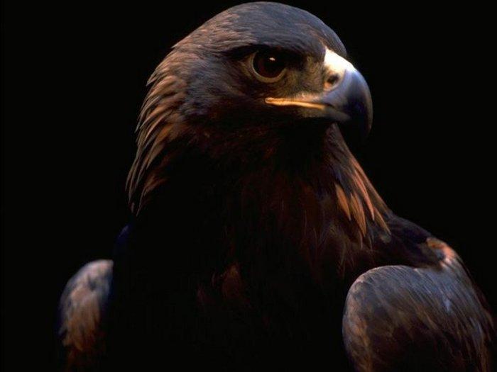 Animals_Birds__001747_1.jpg (700x525, 27Kb)