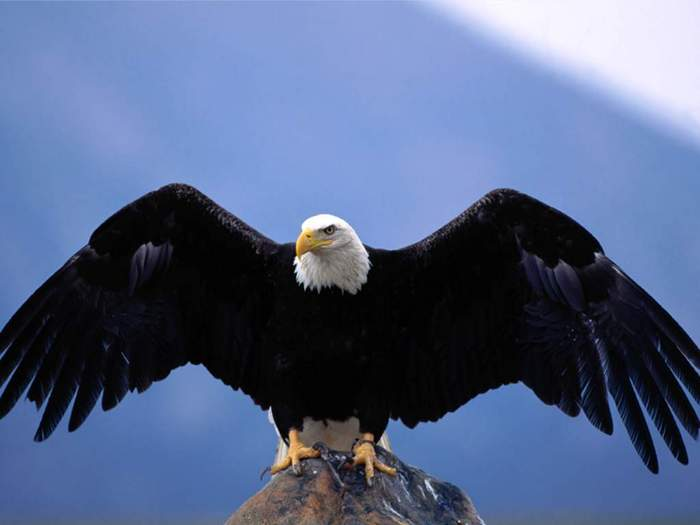 Animals_Birds__001960_1.jpg (700x525, 21Kb)